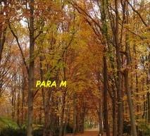 PARA M