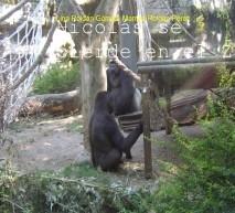 Nicolás se pierde en el zoo