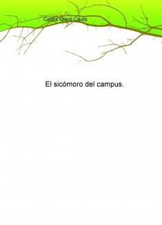El sicómoro del campus