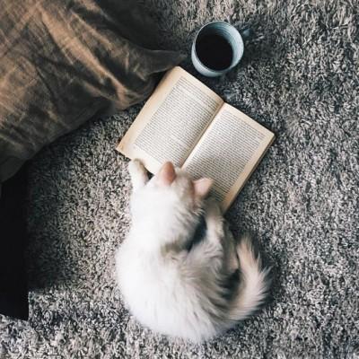 ¿Alguien más tiene un compañero de lectura así de aplicado? :)